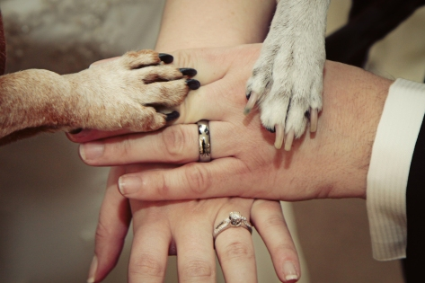click_chicks_photography_wedding_laguna beach_dogs