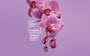 2 pantone orchid,jpg